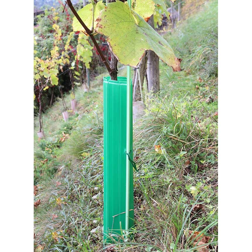 MonoTube 60 cm, grün - Rebschutzhülle mit Drahtanbinder