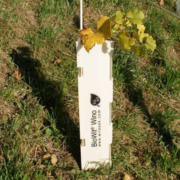 BioWit Wino