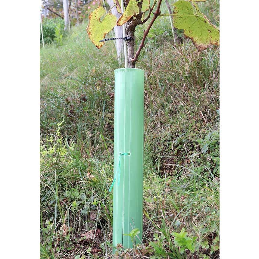 EcoTube Plus 60 cm, öffenbar - Rebschutzsäule