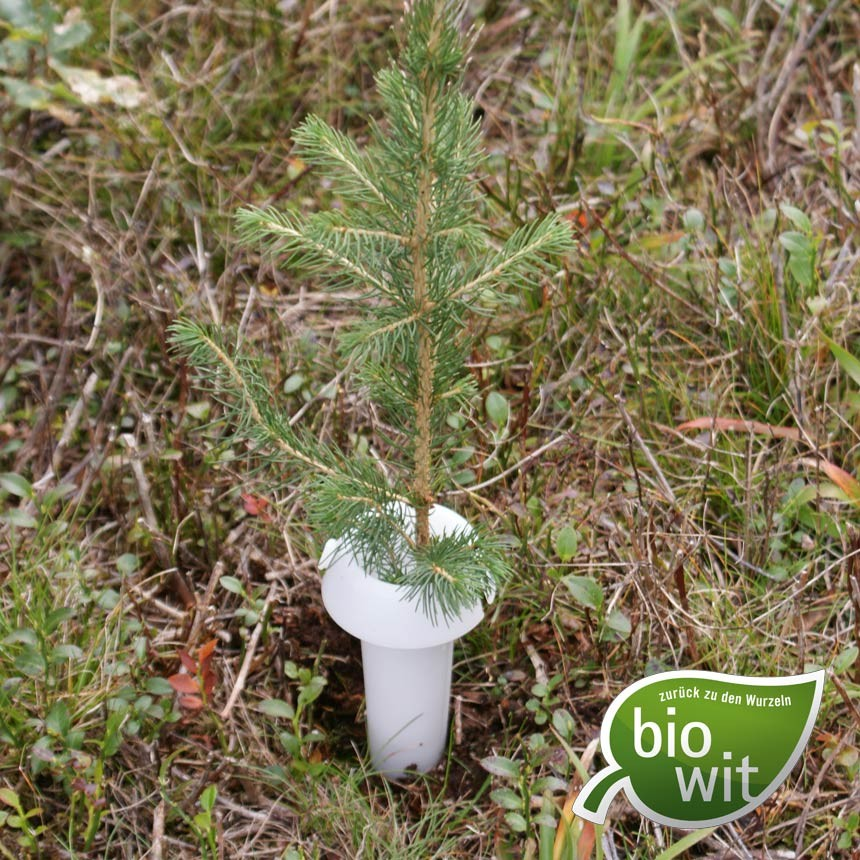 HyloPro Pine Weevil Protection Collar