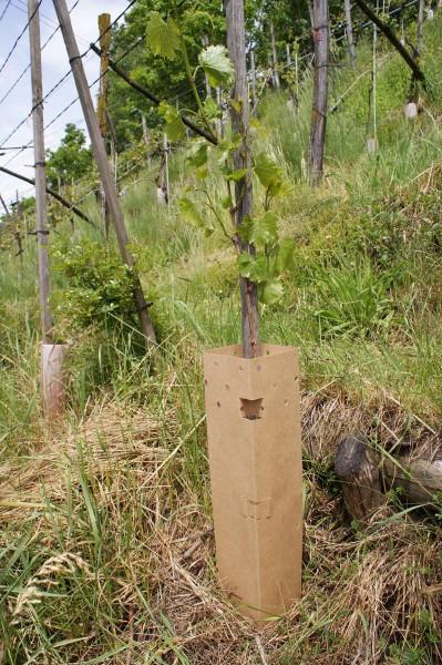 BioWit® NT - Natur Typ, Rebschutzsäule