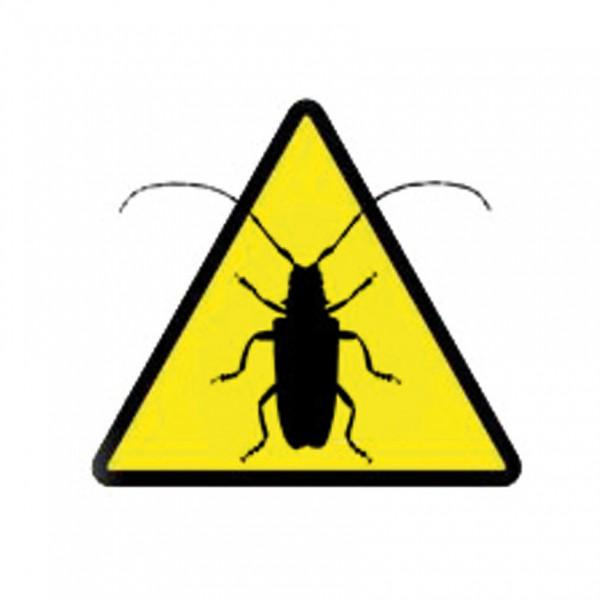 Glabriwit Pro - Asian longhorn beetle (Anoplophora glabripennis)